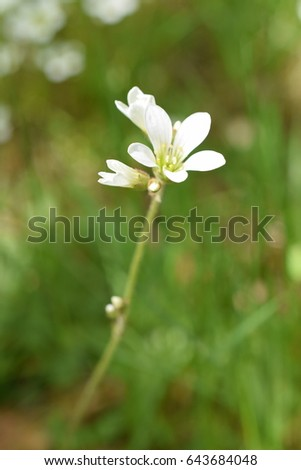 Dainty white flower growing in forest in the spring #643684048