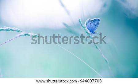 Nature background concept. Beautiful summer meadow background. Inspirational nature closeup. #644007703