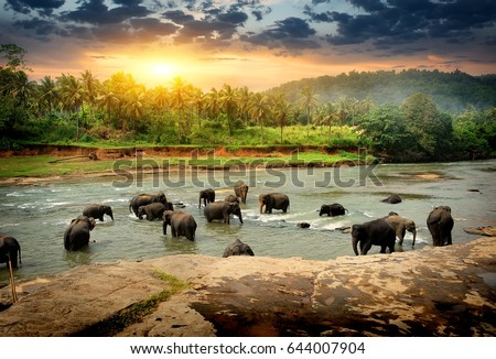 Herd of elephants bathing in the jungle river of Sri Lanka Royalty-Free Stock Photo #644007904