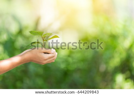 plant a tree.Symbol of spring and ecology concept #644209843