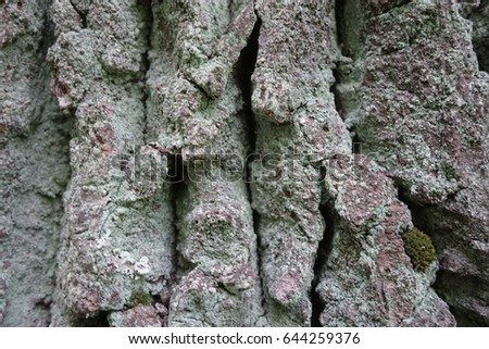 Detail of oak tree bark #644259376
