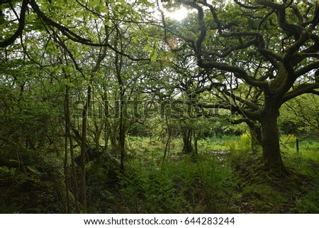 Into the woods #644283244