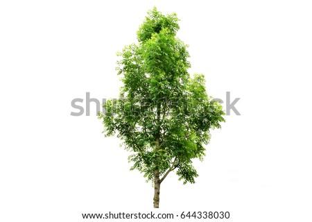 Tree isolated nature on white background. #644338030