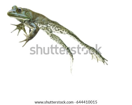 stop action Leaping and jumping Frog on the go on white background #644410015