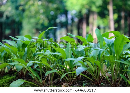 plants garden   #644603119