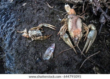 The dead crayfish and fishes who have died from ecological disaster #644795095