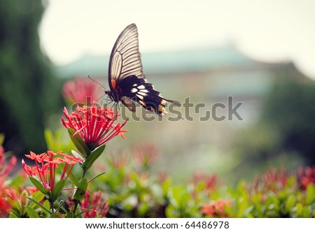 A butterfly on a beautiful flower. The colorful butterfly stays on a beautiful flower in a park, the blurry background gives this picture great feeling, like a beautiful oil painting.