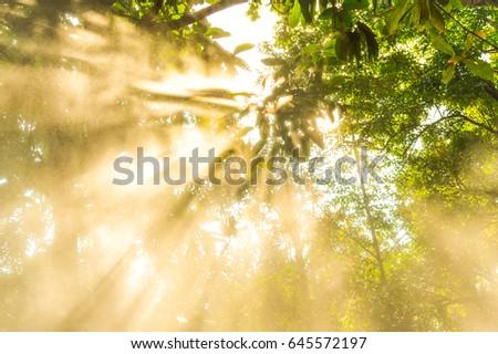 Morning sun light rays #645572197