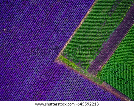 Aerial view of lavender field. #645592213