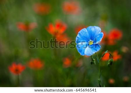 Flowers #645696541