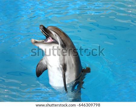 dolphin #646309798