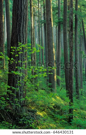 Emerald Forest #646430131