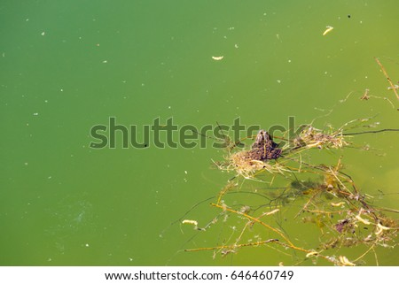 Frog in water #646460749