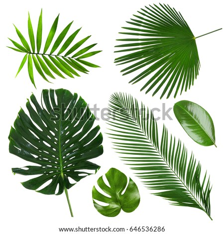 Different tropical leaves on white background #646536286