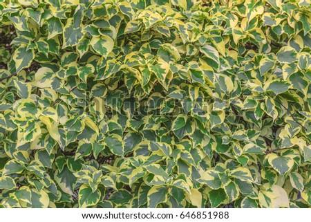 leaves texture  #646851988