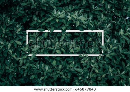 Square frame, Creative layout made with green leaves background. Blank for advertising card or invitation. Nature concept. Summer poster.