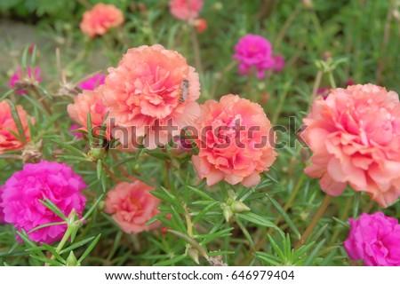Flower #646979404