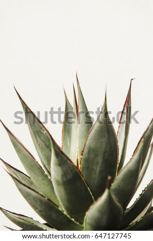 Cactus succulent isolated on white background #647127745