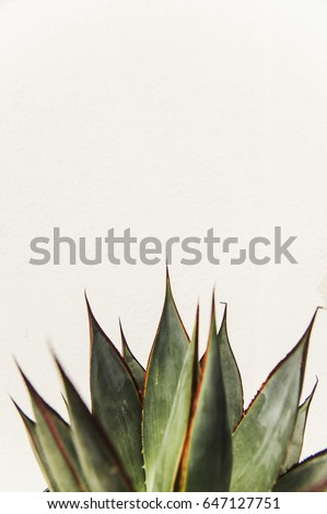 Cactus succulent isolated on white background #647127751