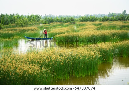 Mekong delta landscape with Vietnamese woman rowing boat on Nang - type of rush tree field, South Vietnam