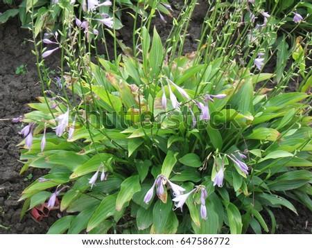 Flowering plant  #647586772