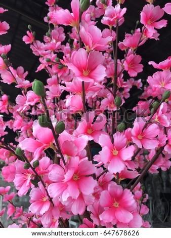 Sakura #647678626