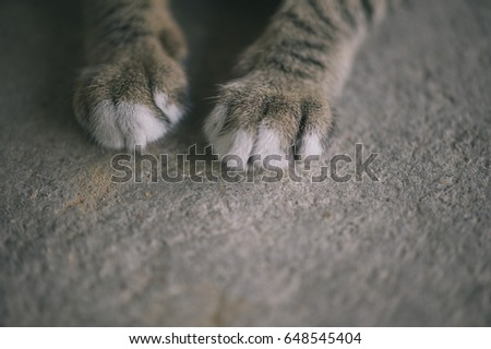 Cat's feet vintage style. Gray color.  #648545404