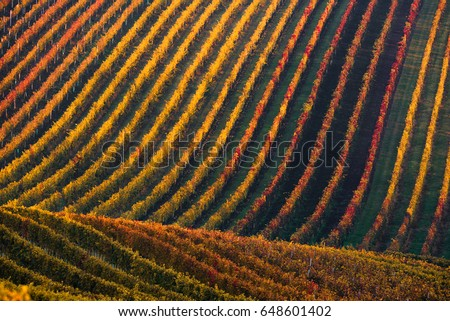 Rows Of Vineyard Grape Vines.Autumn Landscape With Colorful Vineyards.Grape Vineyards Of Czech Republic.Abstract Background Of Autumn Vineyards Rows.Autumn Color Vineyard Landscape. Line and Vine    #648601402