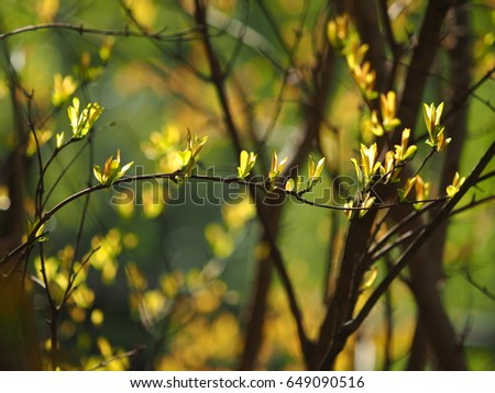 The fresh green leaves full of the trees in the garden with the warm sunlight #649090516