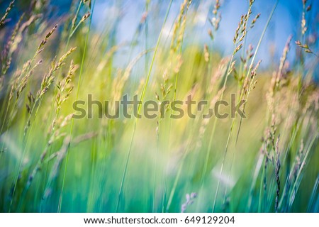 Beautiful close up ecology nature landscape with meadow. Abstract grass background. #649129204