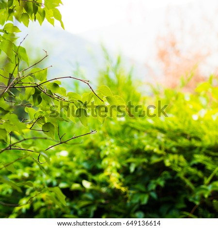 Nature background with green branches and leaves #649136614
