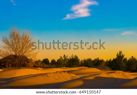Futuristic, fantastic photo landscape, bare tree without leaves and pine forest in the dunes of sand at sunset. #649150147