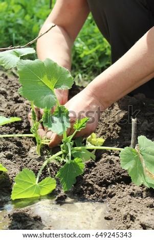 Spring, planting #649245343