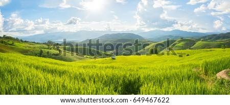 Panorama Green rice field with mountain background at Pa Pong Piang Terraces Chiang Mai, Thailand #649467622