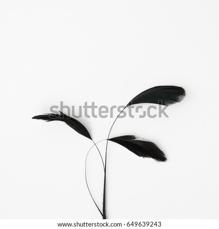 Minimal style. Minimalist Fashion photography. Decorative composition of black feathers on a white table. Flat lay. Top View