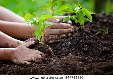 Child and parent hand planting young tree on black soil together as save world concept #649766830