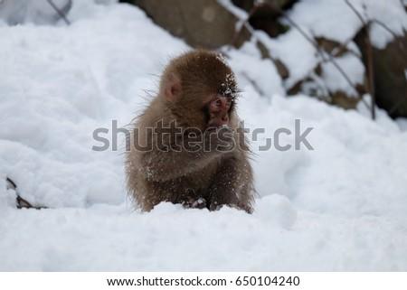 monkey #650104240