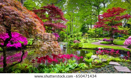 Traditional Japanese Garden in The Hague. #650471434