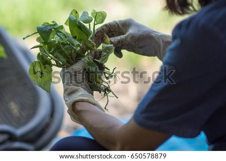 Plant flowers in pots. #650578879