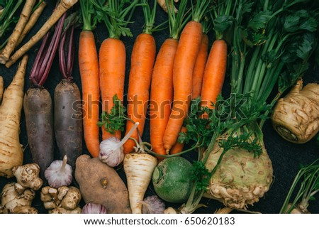Root crops, carrots, parsley root, turnip, onion, garlic, Jerusalem artichoke, horseradish. Root crops background. Food background #650620183
