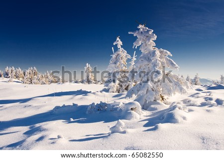 Trees covered with hoarfrost and snow in mountains. #65082550