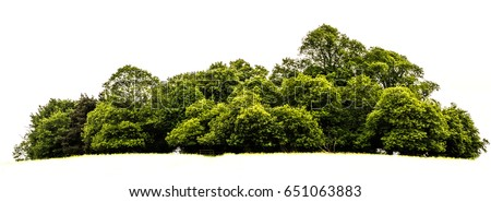 Trees island isolated on white background Royalty-Free Stock Photo #651063883