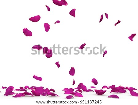 Violet rose petals fall to the floor. Isolated background #651137245