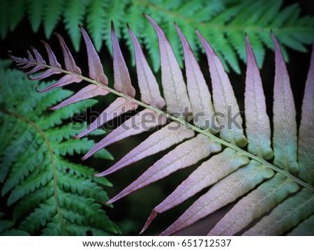 Fern Leaves Background #651712537