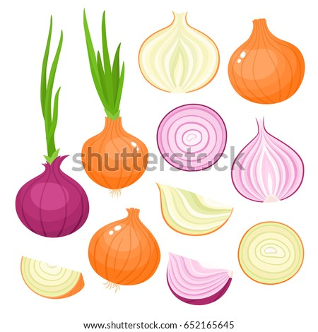 Bright vector set of colorful half, slice and whole of onion. Fresh cartoon vegetable isolated on white background. Illustration used for magazine, book, poster, card, menu cover, web pages. Royalty-Free Stock Photo #652165645