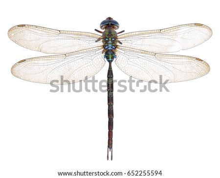 dragonfly isolated on a white background #652255594