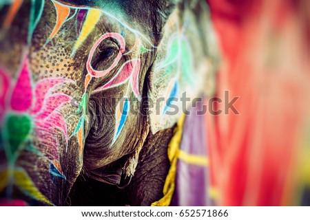 Elephant. India, Jaipur, state of Rajasthan.  #652571866
