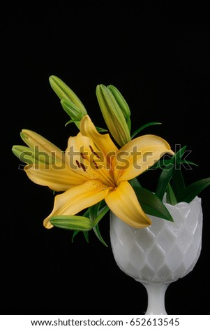 Yellow lily in a white flower vase isolate in black background #652613545