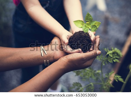 Hands holding a tree to plant #653053000
