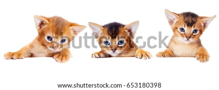 small Abyssinian kitten peeks out because of a white box #653180398